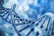 Des chercheurs américains veulent réécrire le génome humain