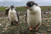 Réchauffement climatique : quelles sont les espèces qui pourraient disparaître ?